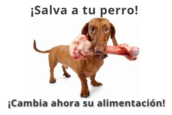 alimentación sana para tu perro